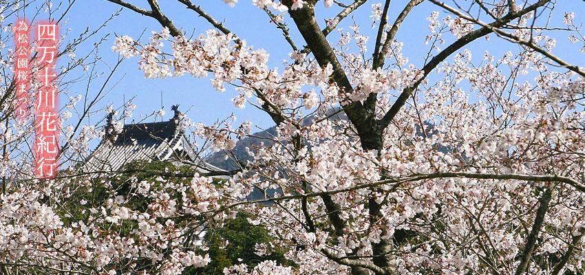 四万十川花紀行 為松公園桜まつり