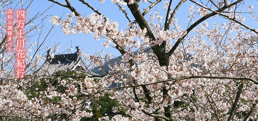 Shimanto River Hanaki act pine park Sakura Festival